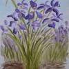 Les iris sont en fleur
